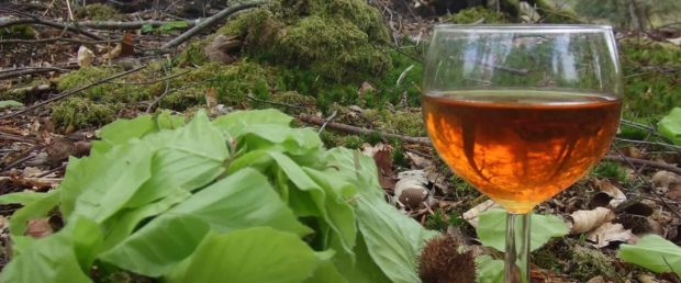 Beech Leaf Gin