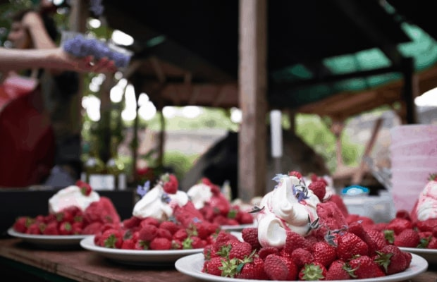The Natural Cook 'Spiked' summer pudding with grappa cream
