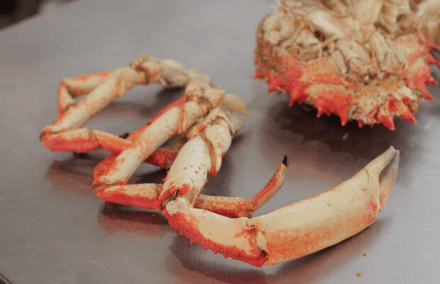 Removed legs of Spider Crab