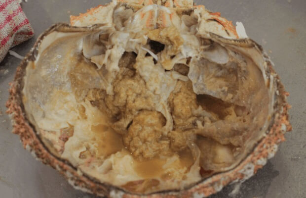 Scrape the rich brown meat from the shell f spider crab