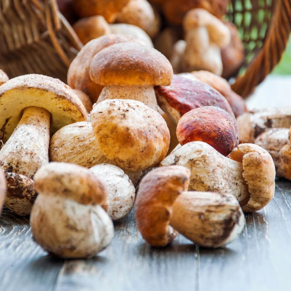 Porcini mushrooms climate change