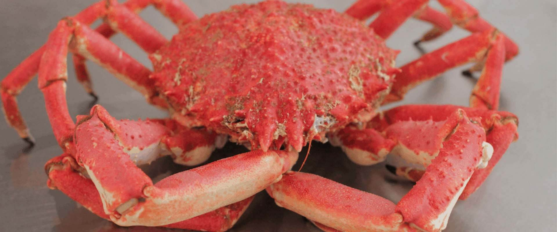 cook and prepare a spider crab